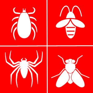 Первая медицинская помощь при укусе насекомых Правила оказания